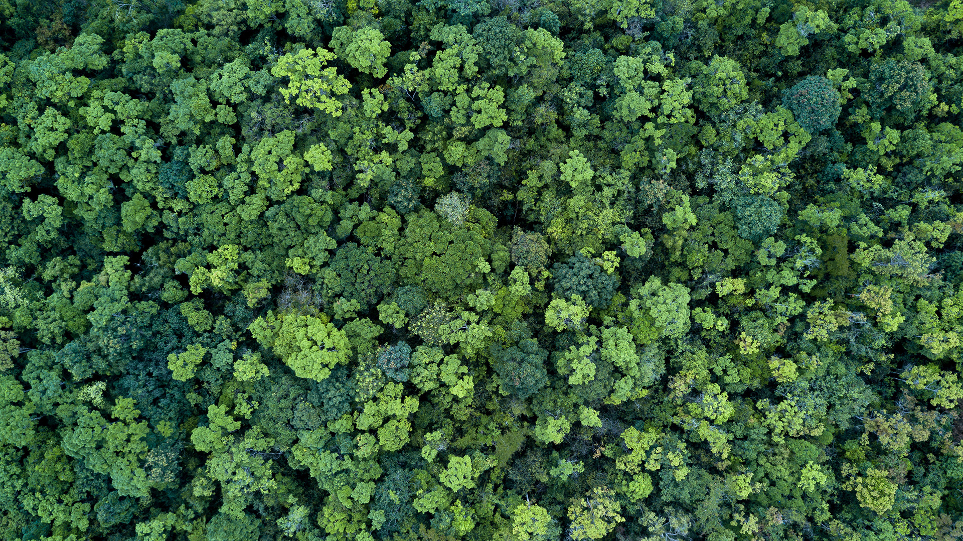 Forest and tree landscape texture background, Aerial top view fo